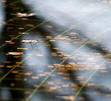 Fall, Korean War Veterans Memorial, Washington D.C. by strangelight