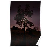 Moonlight tree - Lake Mungo - NSW Poster