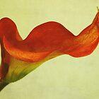 Calla II by Iris Lehnhardt
