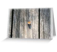 empty acorn Greeting Card