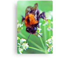 Bee Trouble Canvas Print