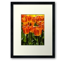 Spring Time Flowers Framed Print
