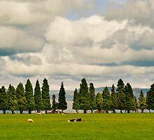 Little Trees Big Skies by Mel Sinclair