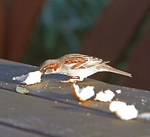A bird enjoying a piece of bread by Keith Larby