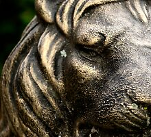 Bronze Lion by TLawrencephoto