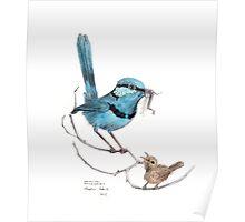 Splendid Wren and Chick Poster