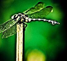 I am a Dragon err..Dragonfly...umm...Got Featured Work by Kornrawiee