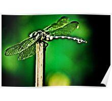 I am a Dragon err..Dragonfly...umm...Got Featured Work Poster