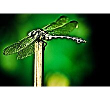 I am a Dragon err..Dragonfly...umm...Got Featured Work Photographic Print