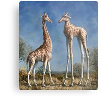 Emmm...Welcome to the herd. Metal Print