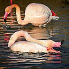 Flamant rose by Marie Moriscot