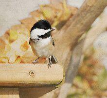 Adorable - Chickadee by Lynda   McDonald