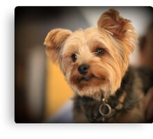 Adorable dog Canvas Print