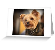 Adorable dog Greeting Card
