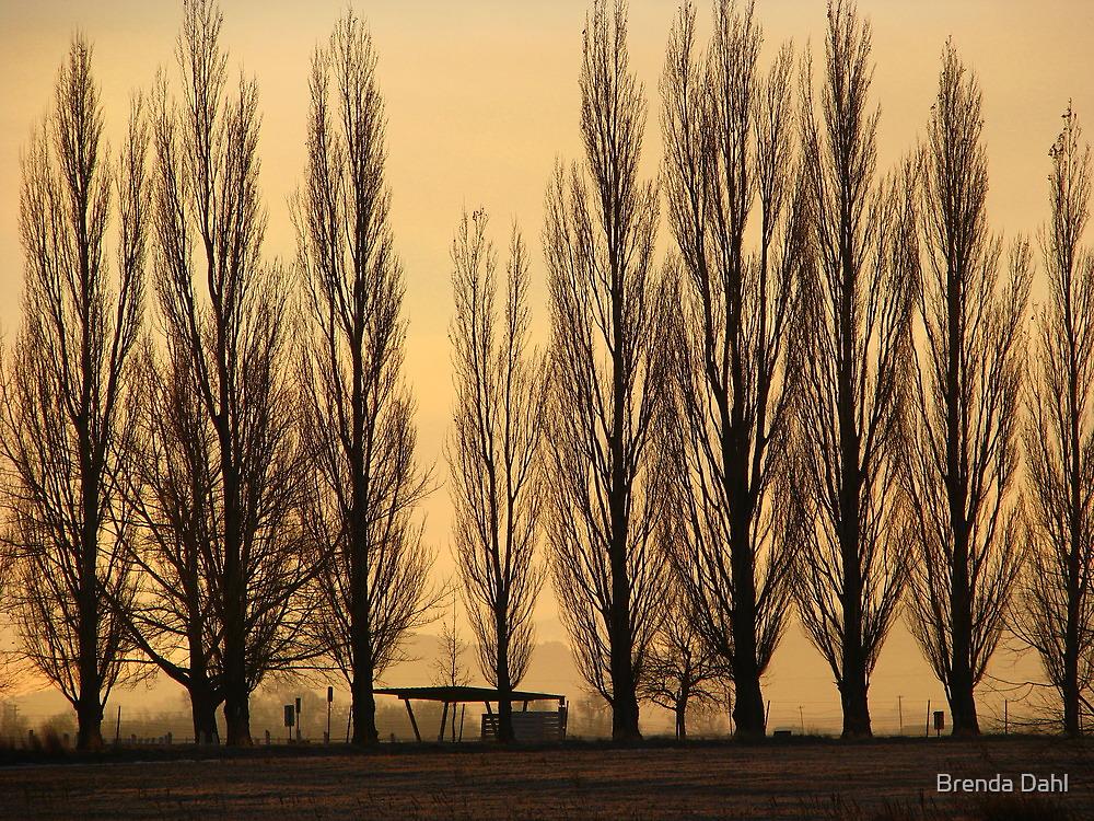 Misty Morning Rise by Brenda Dahl