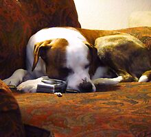 Taking a Snooze after long days work~ by Brenda Dahl
