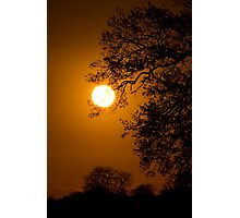 Sunrise Tree  Silhouette Photographic Print