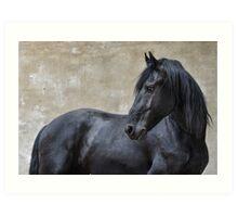 Figaro - Friesian horse Art Print