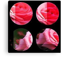 Pink Roses in Anzures 2 Art Circles 3 Canvas Print