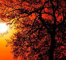 Sunrise Tree  Silhouette by Darren Burroughs