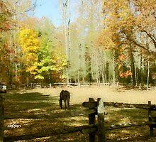 Fall Corral by Seth  Weaver