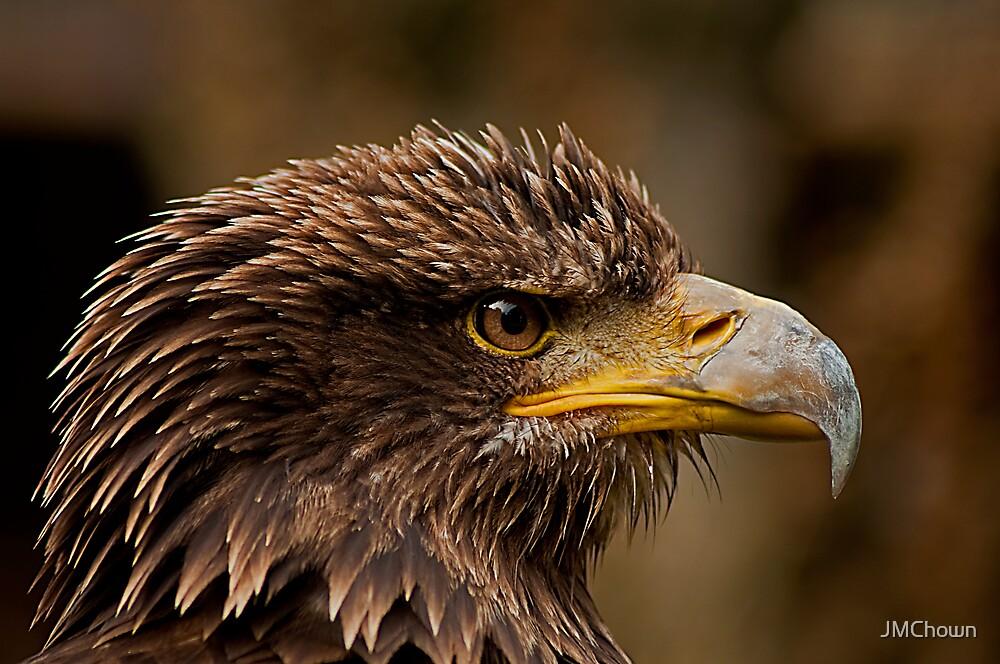Juvenile Bald Eagle Portrait v2 by JMChown