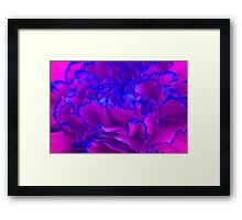 Bold Fuschia Pink and Blue Carnation Flower Framed Print