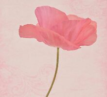 Single Pink Upright Poppy  by Sandra Foster