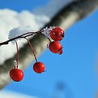 Winter Color Contrasts by RoyceRocks