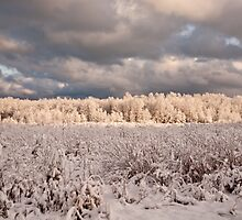 Winter Morn by GailDouglas