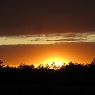 Sunset Glory by Debbie Robbins