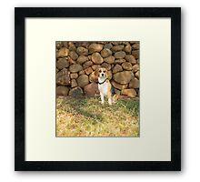Roxie.... Beautiful Beagle.... Framed Print