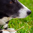 Molly with twig by Eleanor Godley