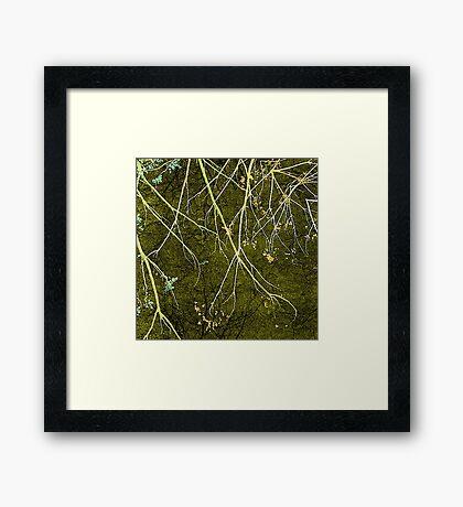 Wild Nature Collage Print Framed Print