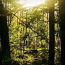 Sunset in the Forest by teresa731