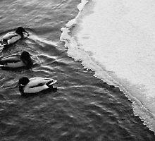Ducks on icey lake by RareMood