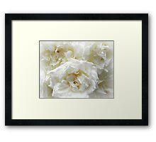 roses roses III Framed Print