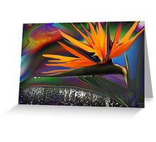 Double headed bird of Paradise Greeting Card