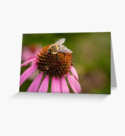 Bee close-up Greeting Card