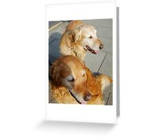 Twice as nice - Two Friendly Golden Retrievers Greeting Card