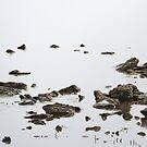 Mist, Macleay Island by modernlifeform