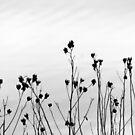 Flower Sticks by Deborah Crew-Johnson