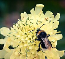 How to Bee Happy by Vicki Field