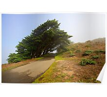 Wind swept trees Poster
