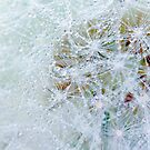 Fluffy Dew Drop by Megan Noble