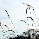 Wispy Weeds by Deborah Crew-Johnson