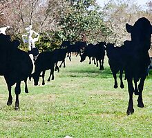 Black Cow Parade by phil decocco