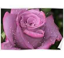Rose on ramp 20111022 2120  Poster