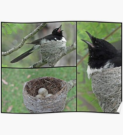 Willy Wagtail and kids Poster