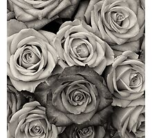 Shaded roses  Photographic Print
